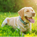 Thumbnail for Summer Safety Tips for Your Dog